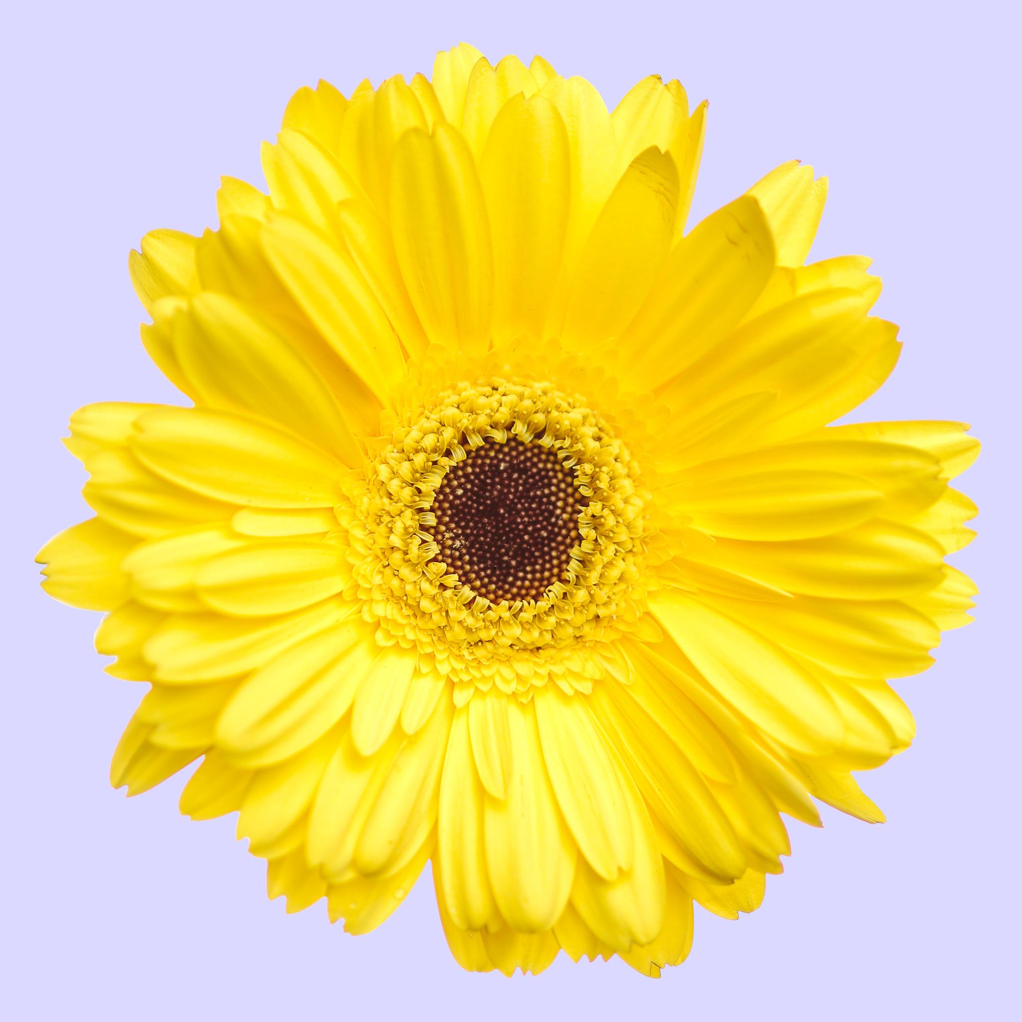 Flowers-102-Edit.jpg