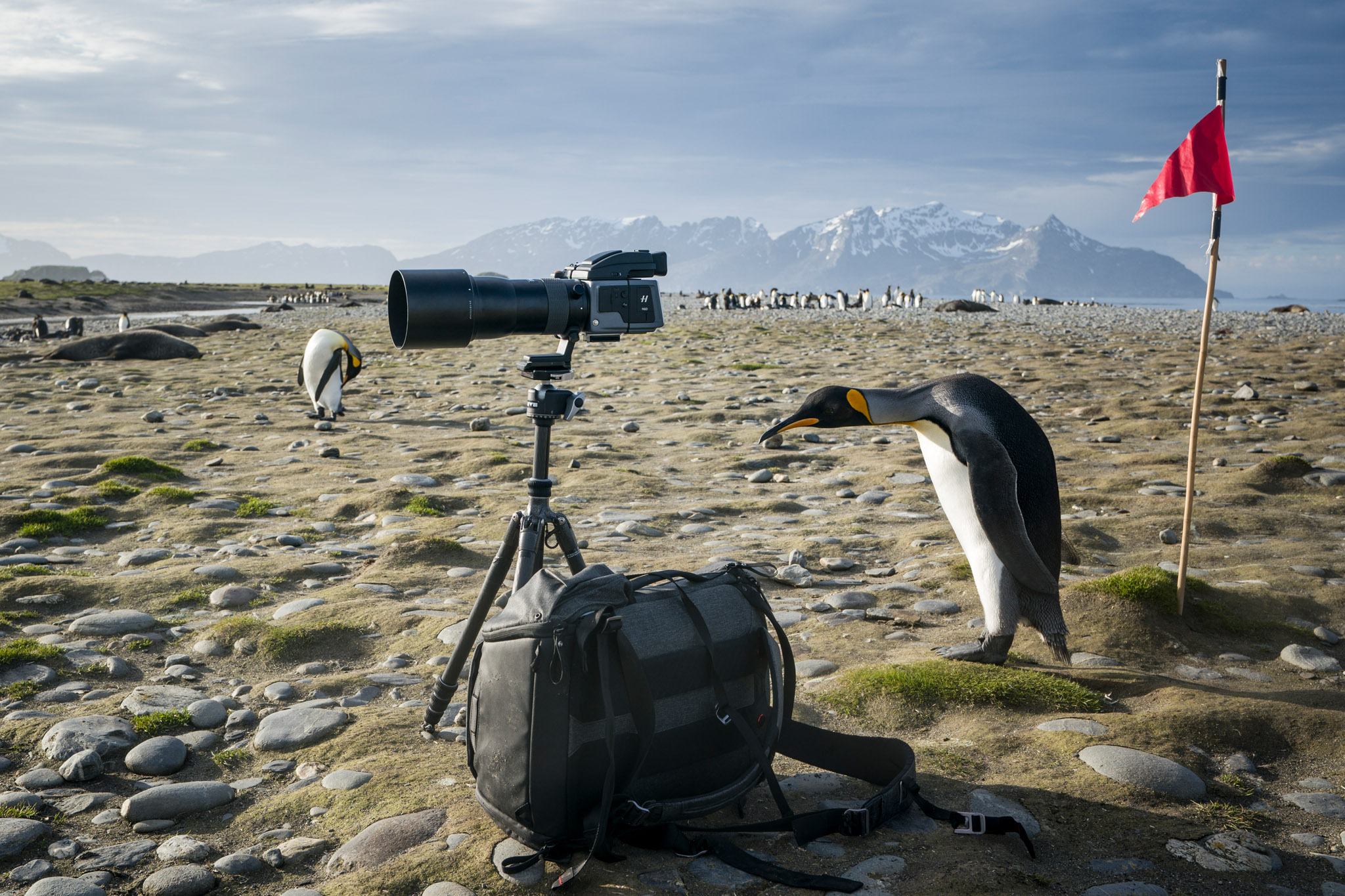 Hasselblad H6D-100c and Peak Design Everyday Backpack 30L.