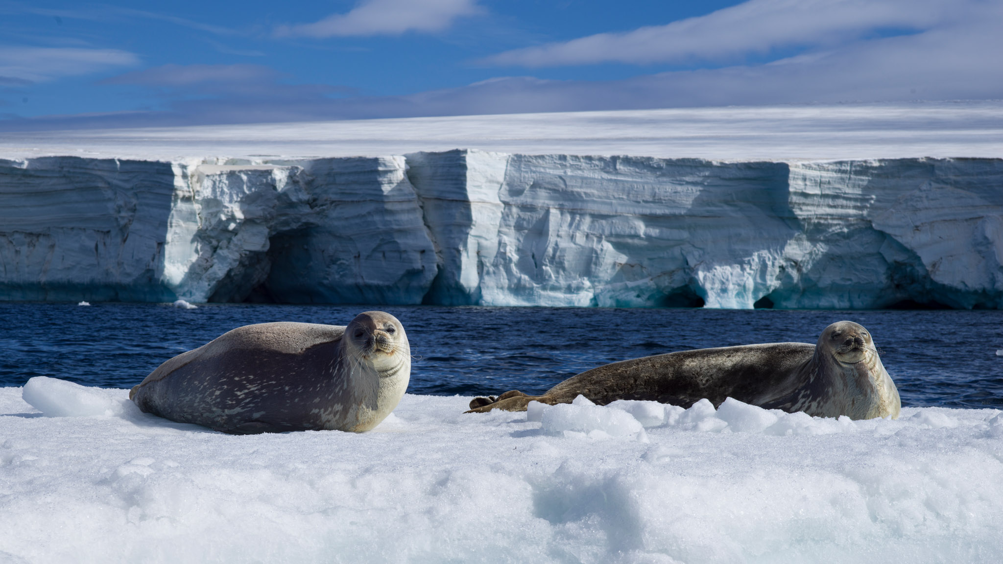 ©Mann_AntarcticaB0000328.jpg