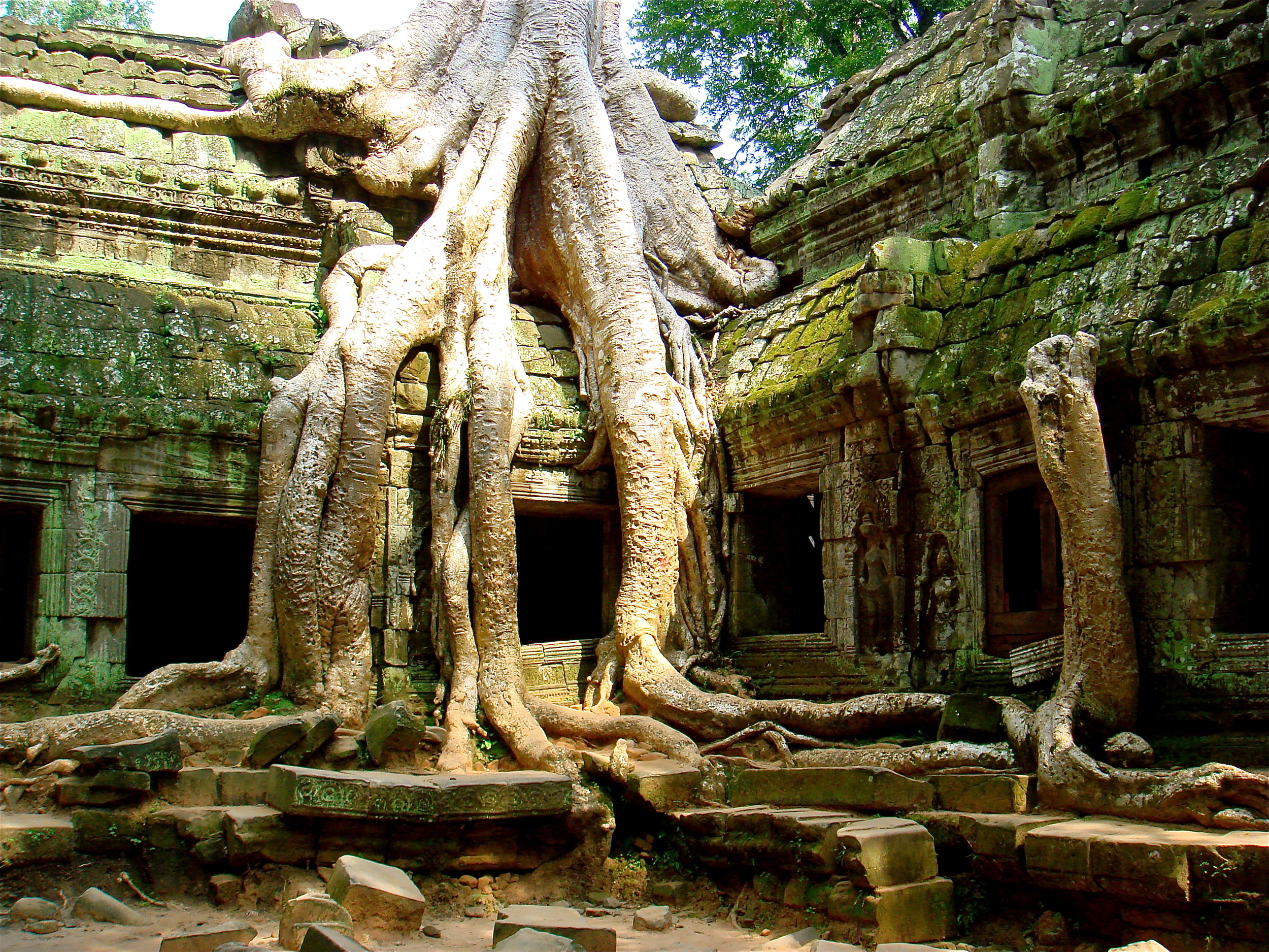 Ta Prohm Temple          Angkor, Siem Reap, Cambodia