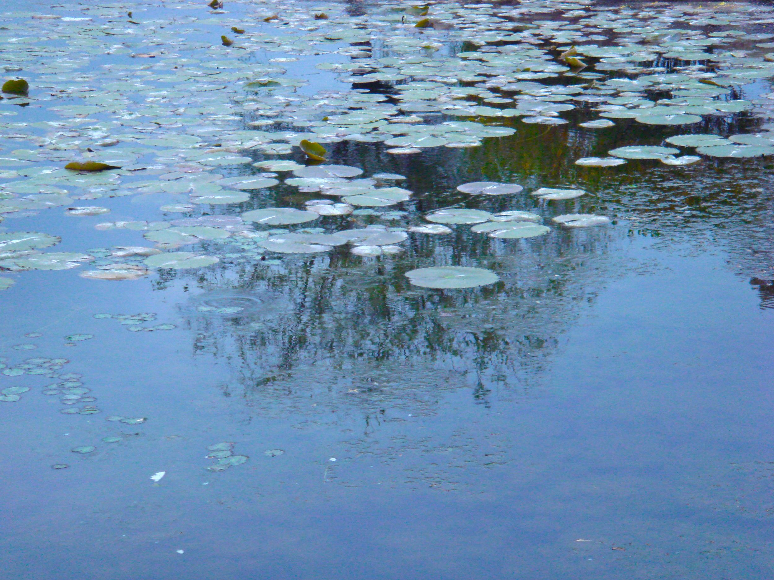 The Lily Pond                           South Korea