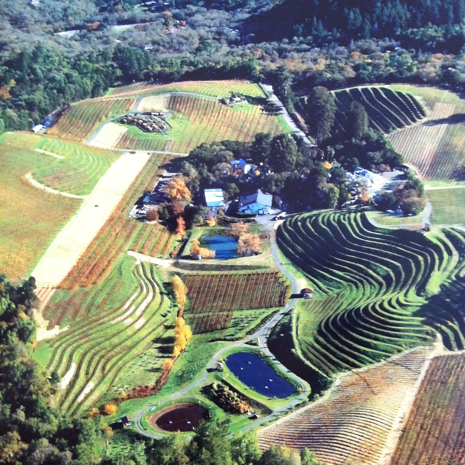 An ariel view of the Benziger Family Winery in Glen Allen, California, USA