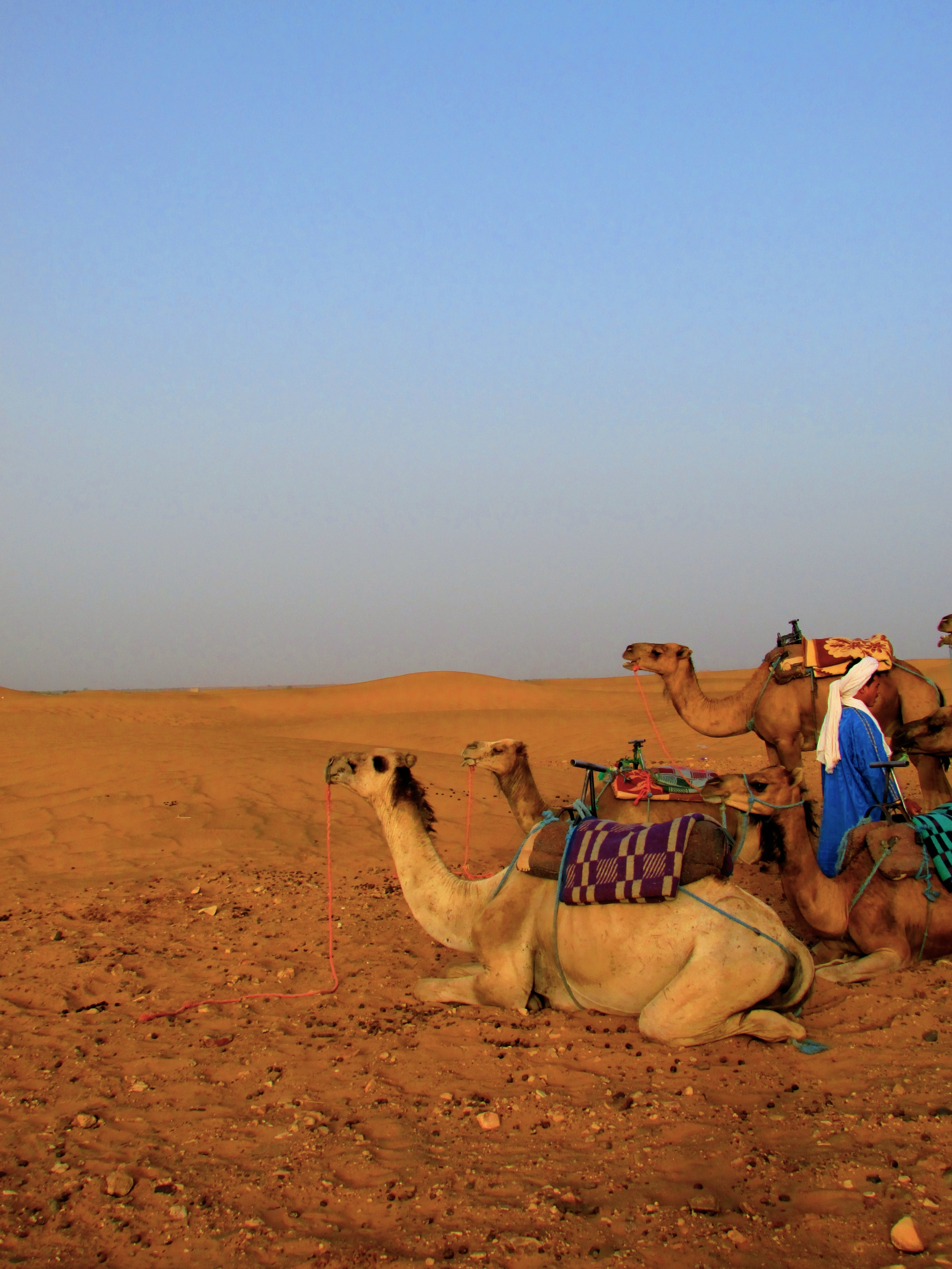 My guide getting the camels ready for the long journey out of the desert in Morocco