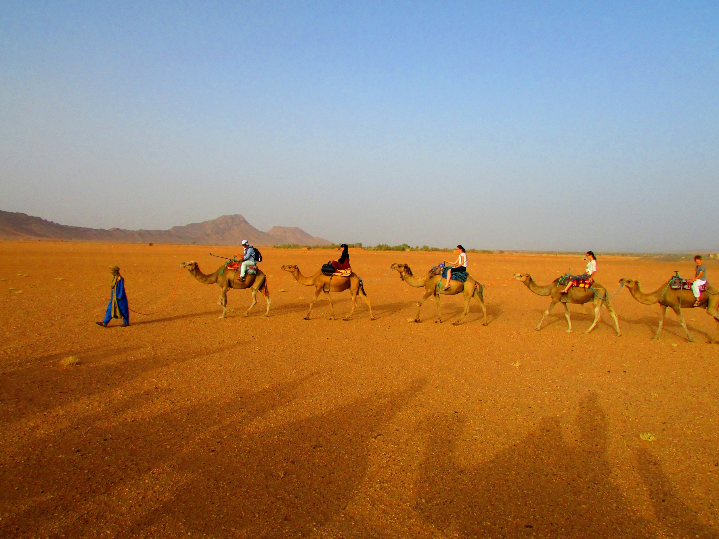 A morning camel ride out of the Sahara in Morocco