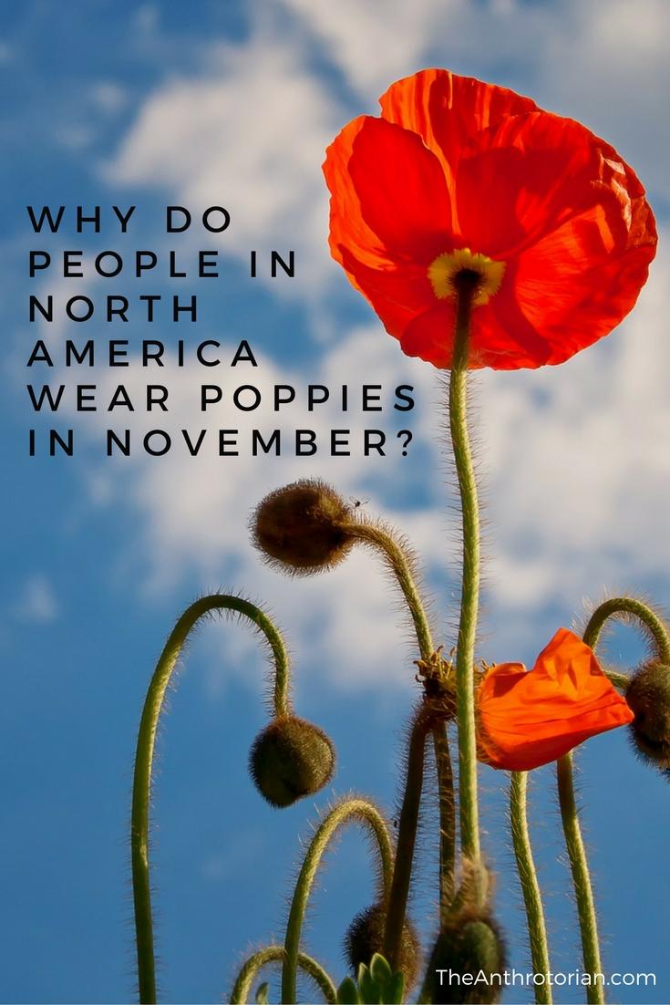 Poppies in November