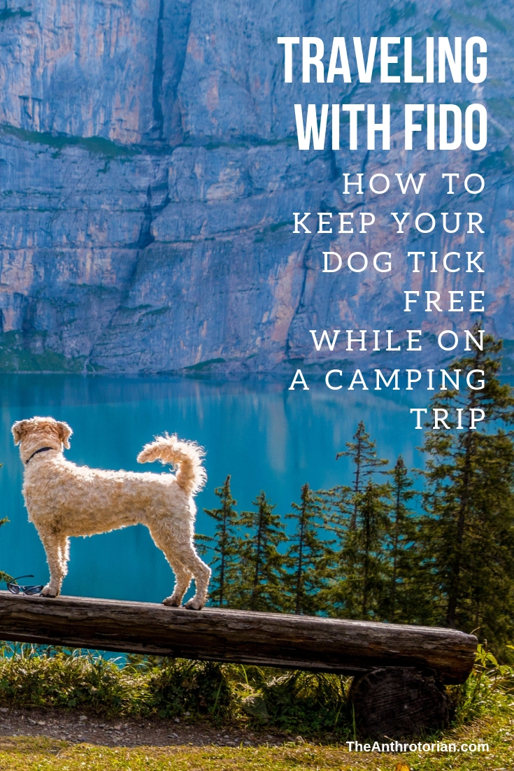 Guest Post: How to Keep Your Dog Tick Free While Camping
