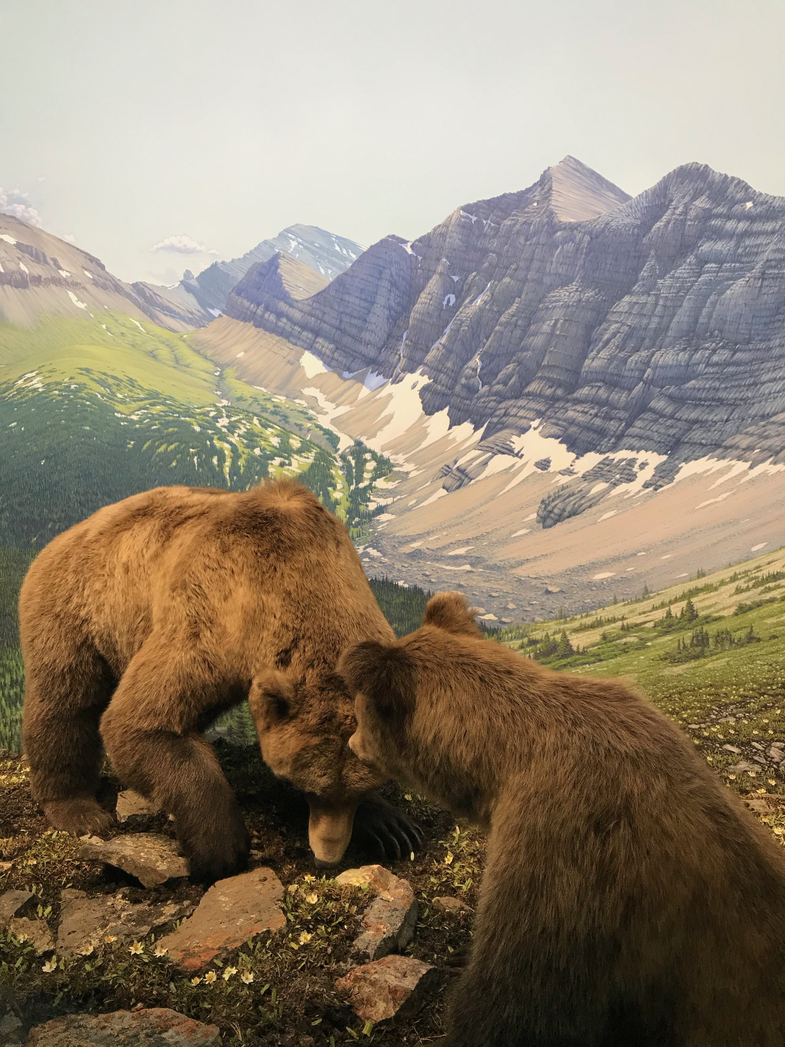 Your guide to the Royal Alberta Museum