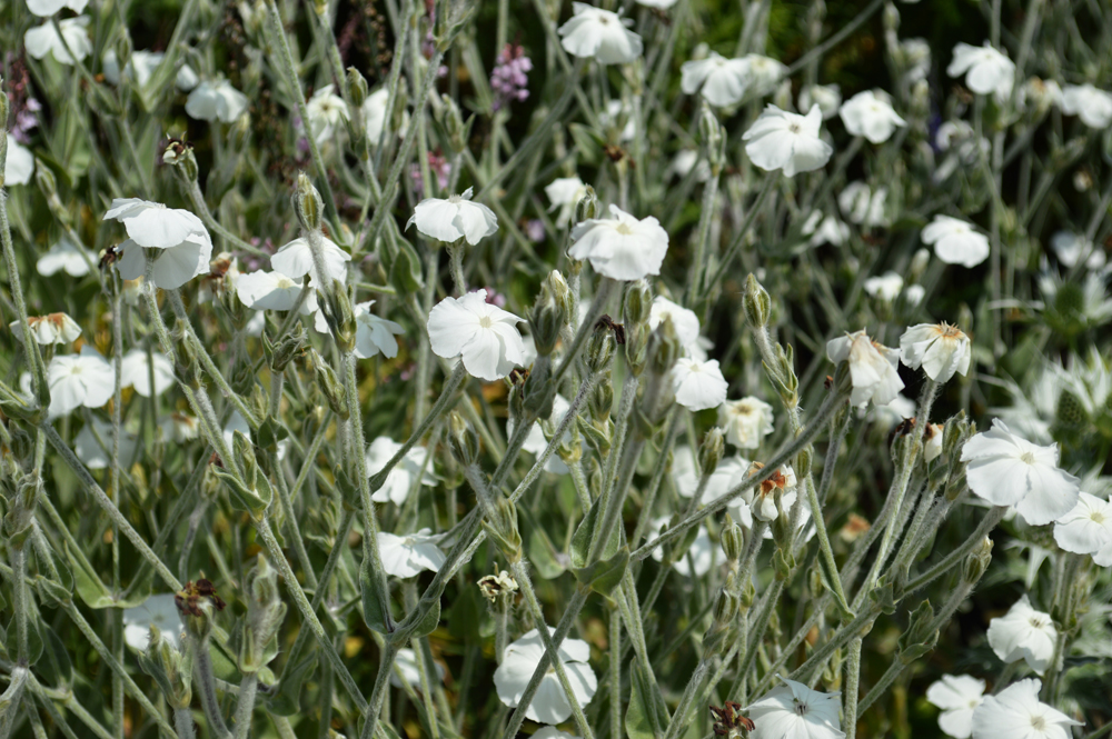 White flowerslowres.jpg