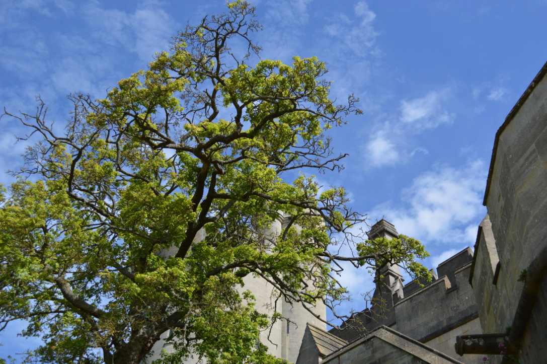 Arundel Castle3.jpg