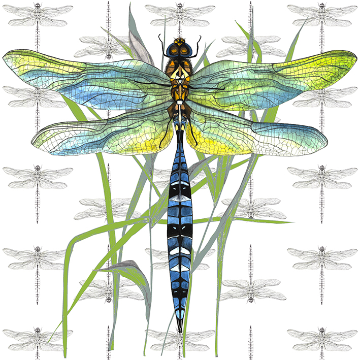 Dragonfly Giclee Print
