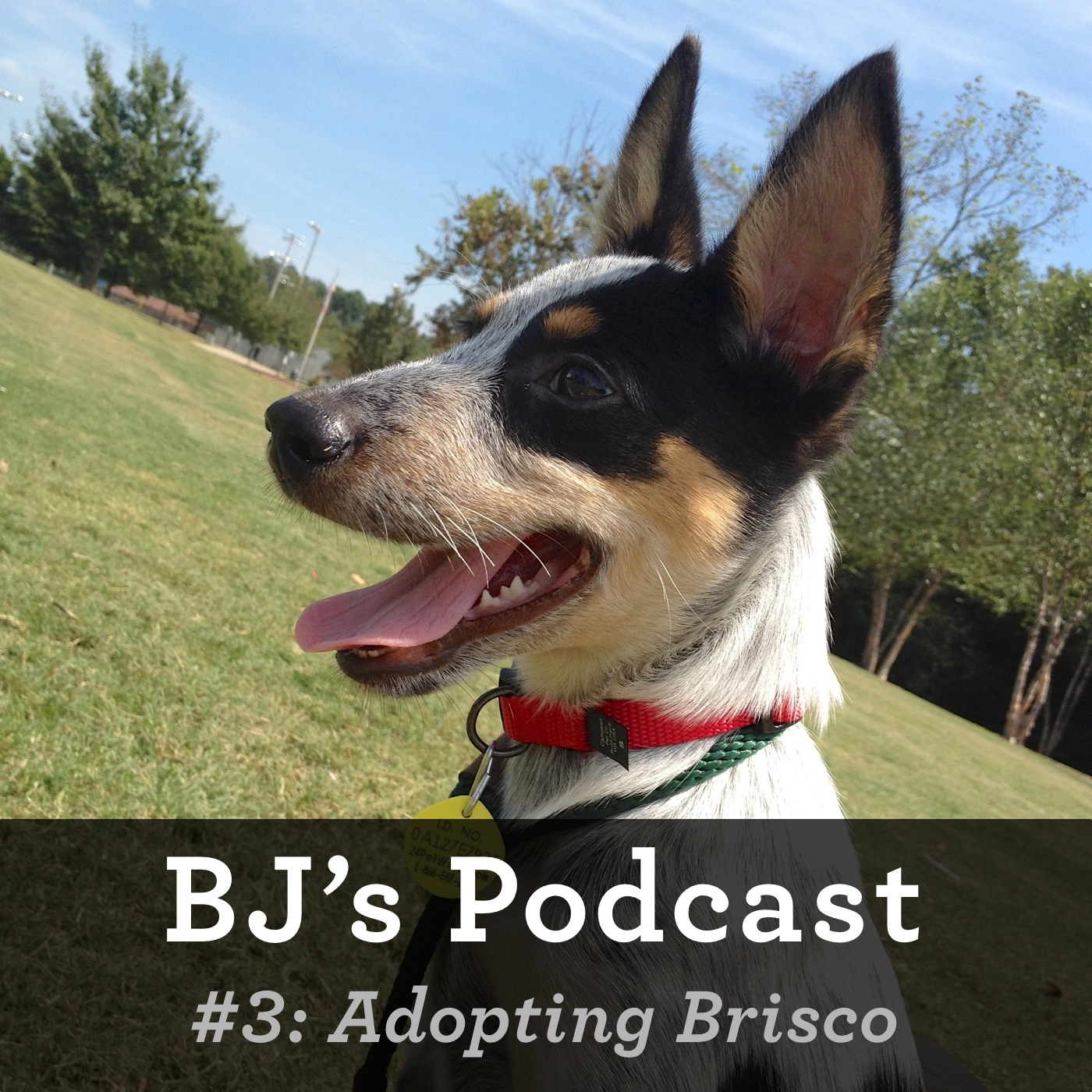 3 - Adopting Brisco.jpg