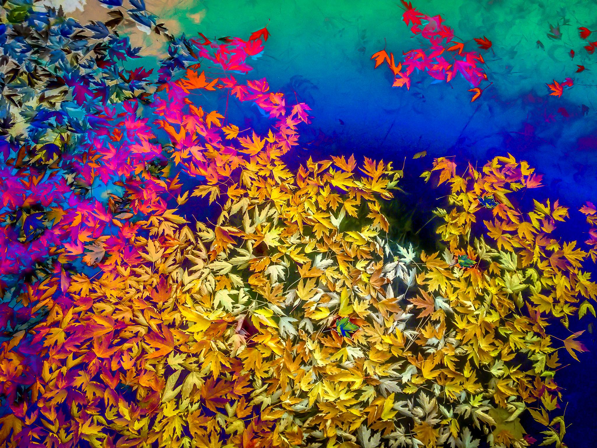 Colorful Fall Leaves digital art