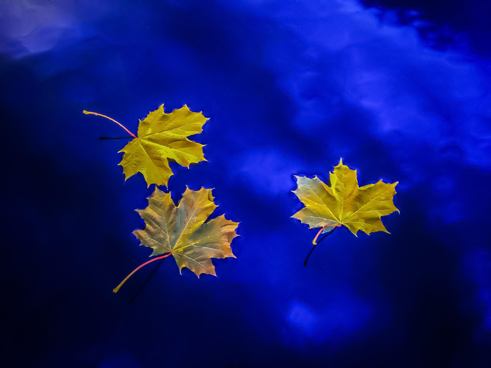 Fall Leaves, Liberty Lake, Washington