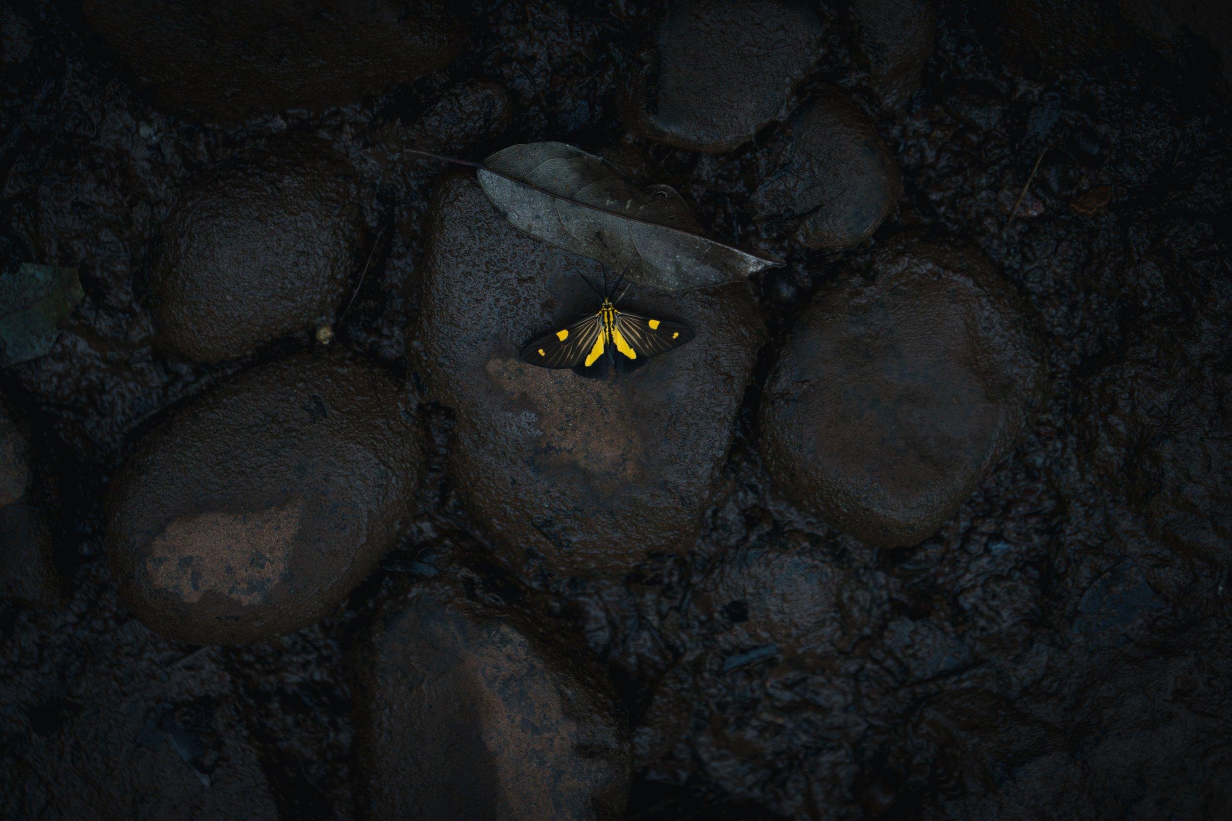 Photo by José Ignacio García Zajaczkowski on Unsplash