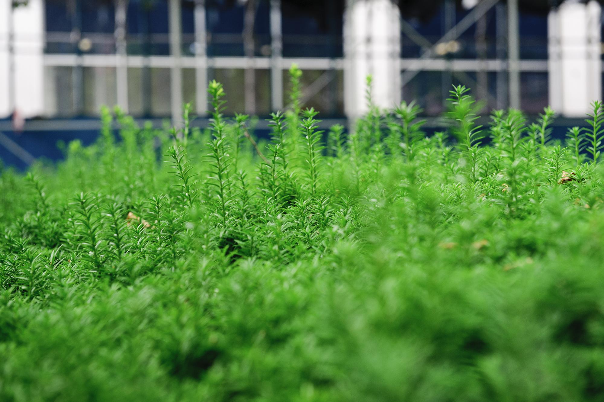 06.07.10-rooftop_BBQ_01.jpg