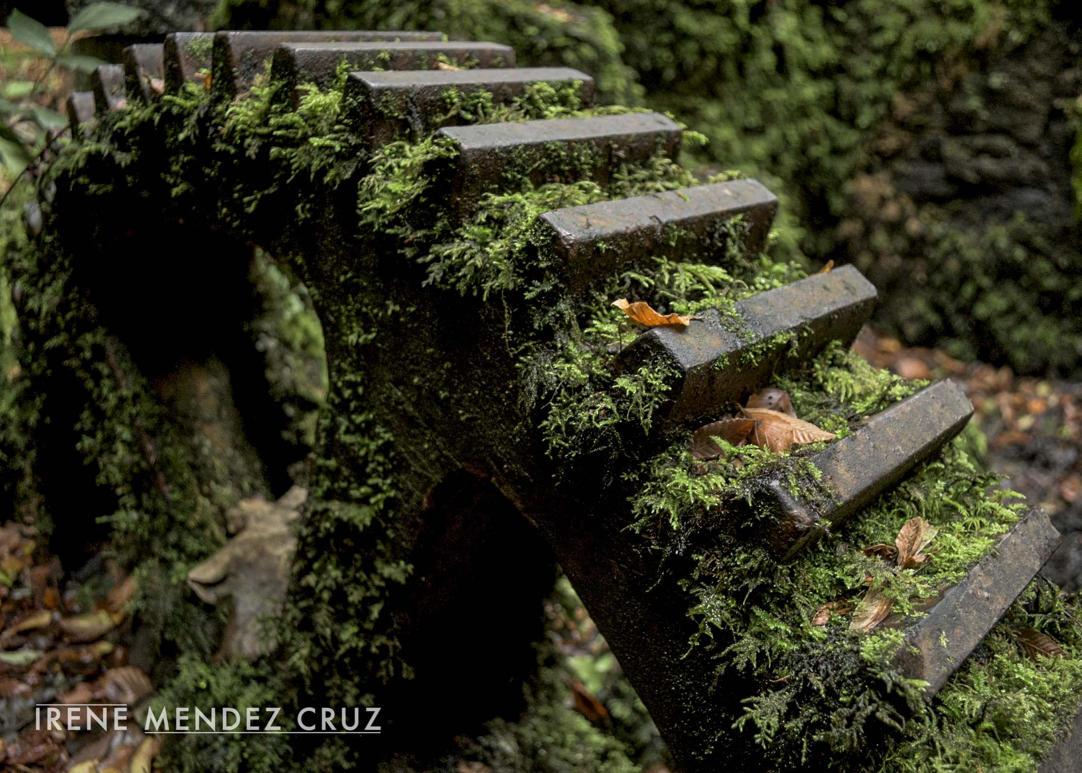 "Reclaimed by nature 2, Kennall Vale, Cornwall. 2014. Digital. Nikon D810 : 18mm - 1/60"" - f.3,5 - ISO 400"