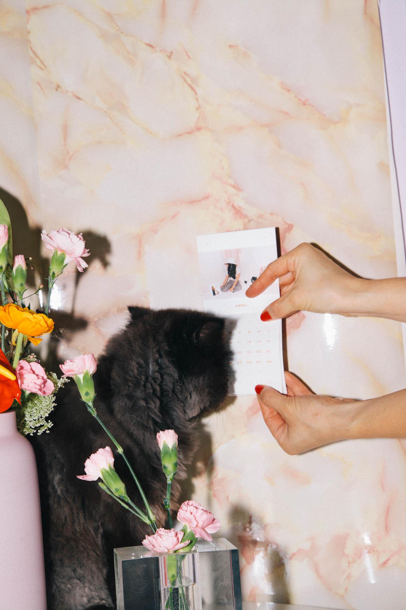 IMG_6840-cat-calendar-puno-goodsgang-krizia-2018-3.jpg
