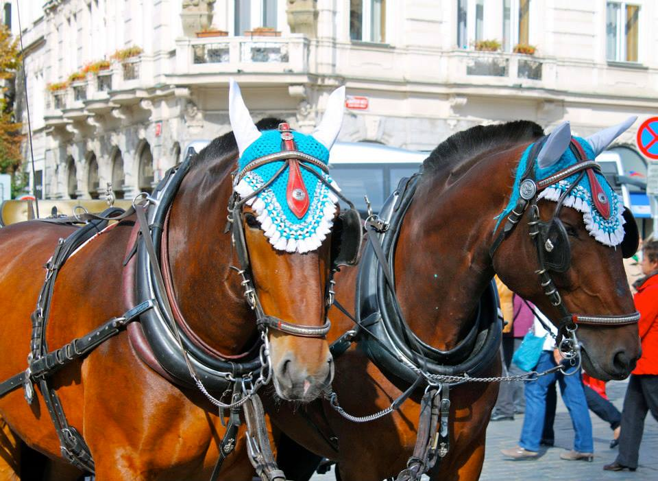 Horses in Prague are styling!