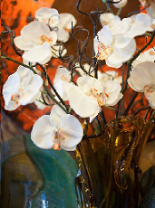 Blooms in glass vases