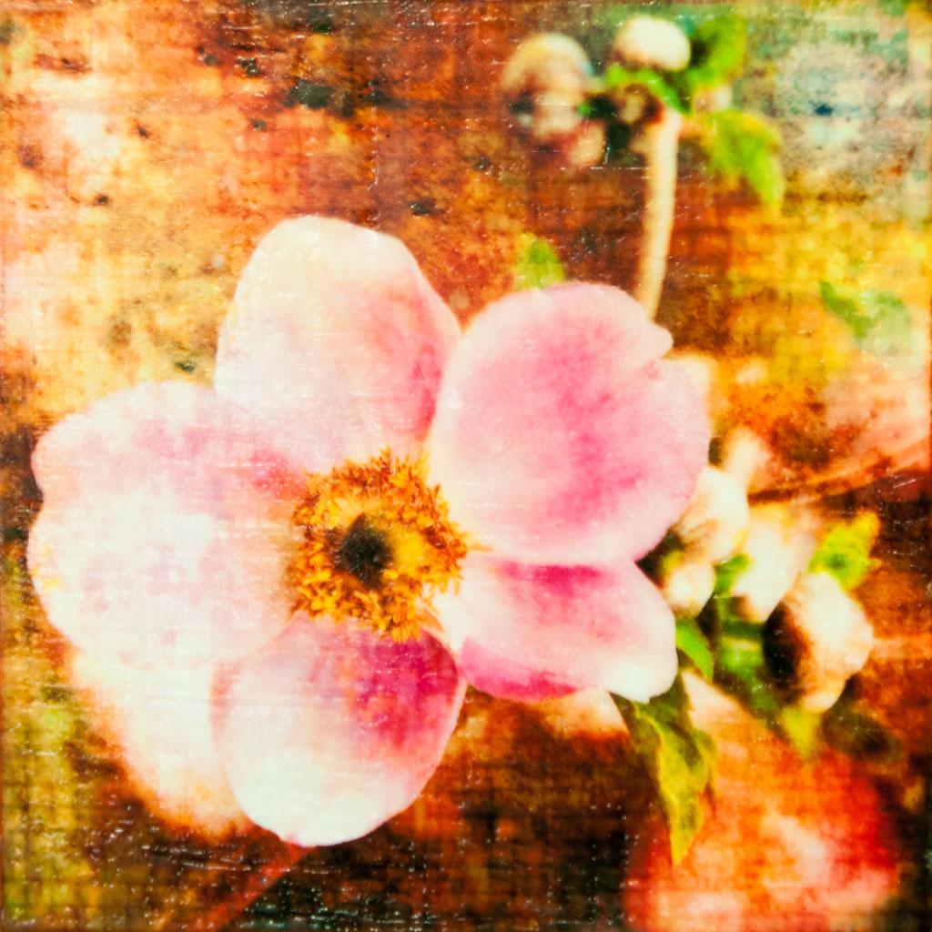Japanese Anemone #1.jpg