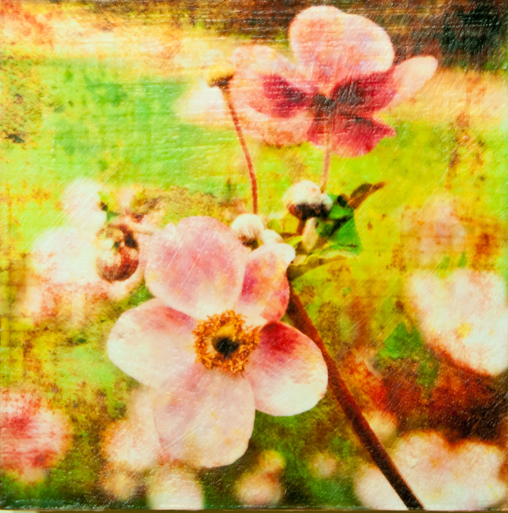 Japanese Anemone #2.jpg