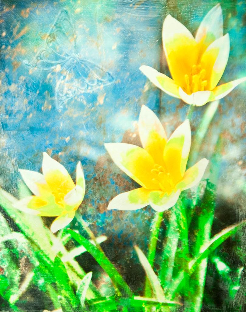 Tarda Tulips & Butterfly.jpg