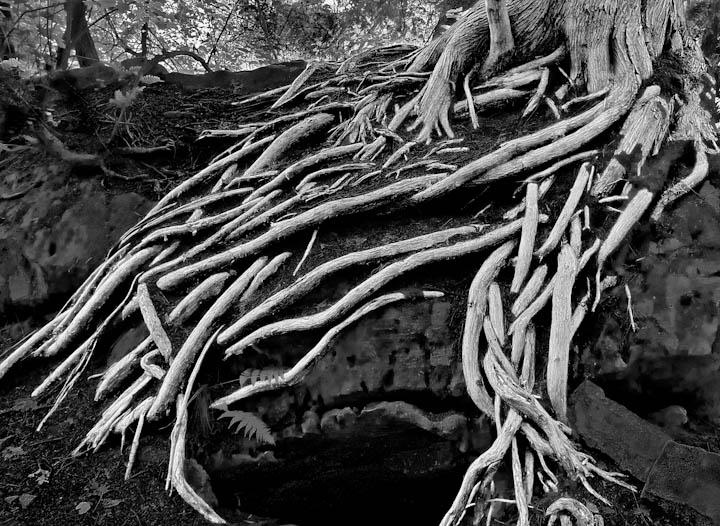 Radiant Tree-2.jpg