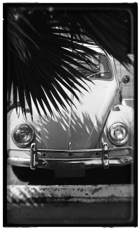santamonica beetle.jpg