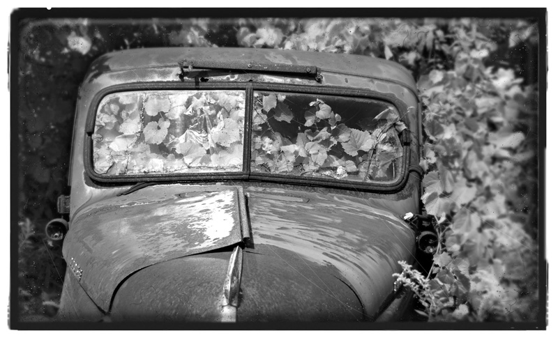 bwilcox_garden truck.jpg