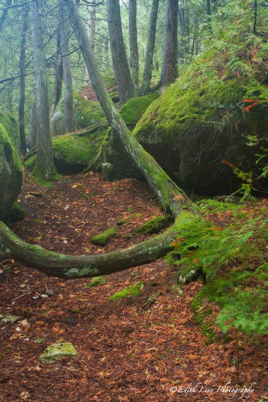 Forest Mist_viewable.jpg