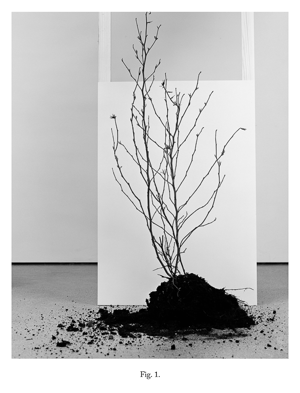 Fig 1, 2012 From the series As IF It Were Bromide Print (Framed) 30.5 x 25.4 cm 12 x 10 in VJE0006  ENQUIRE ABOUT THIS WORK