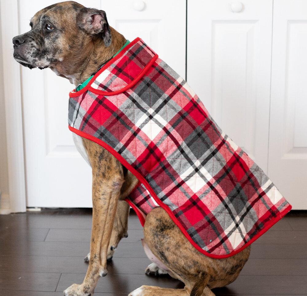 Indy Coat.jpg