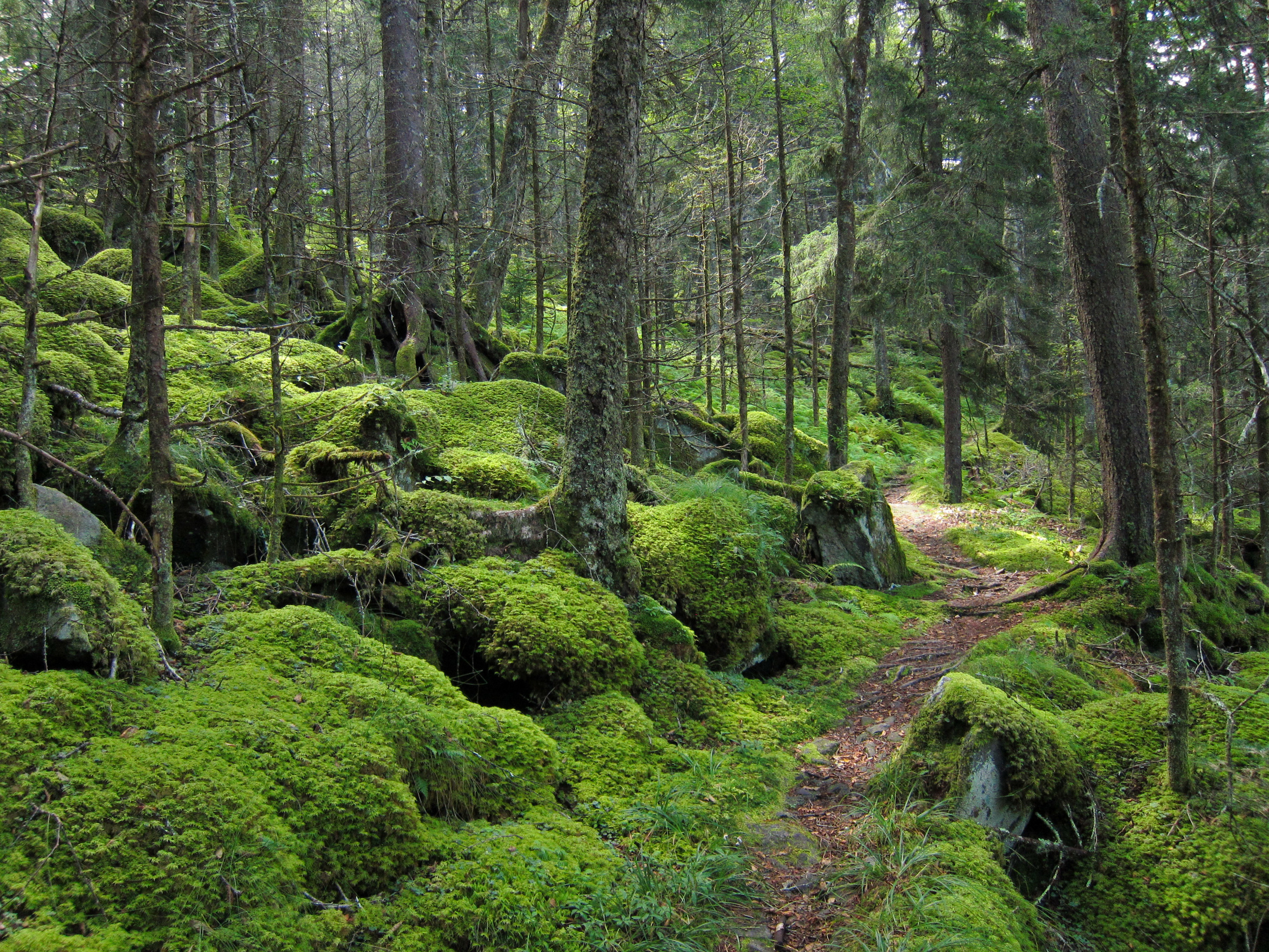 Forest_on_Baxter_Creek_Trail_in_Great_Smoky_Mountains_National_Park.jpg
