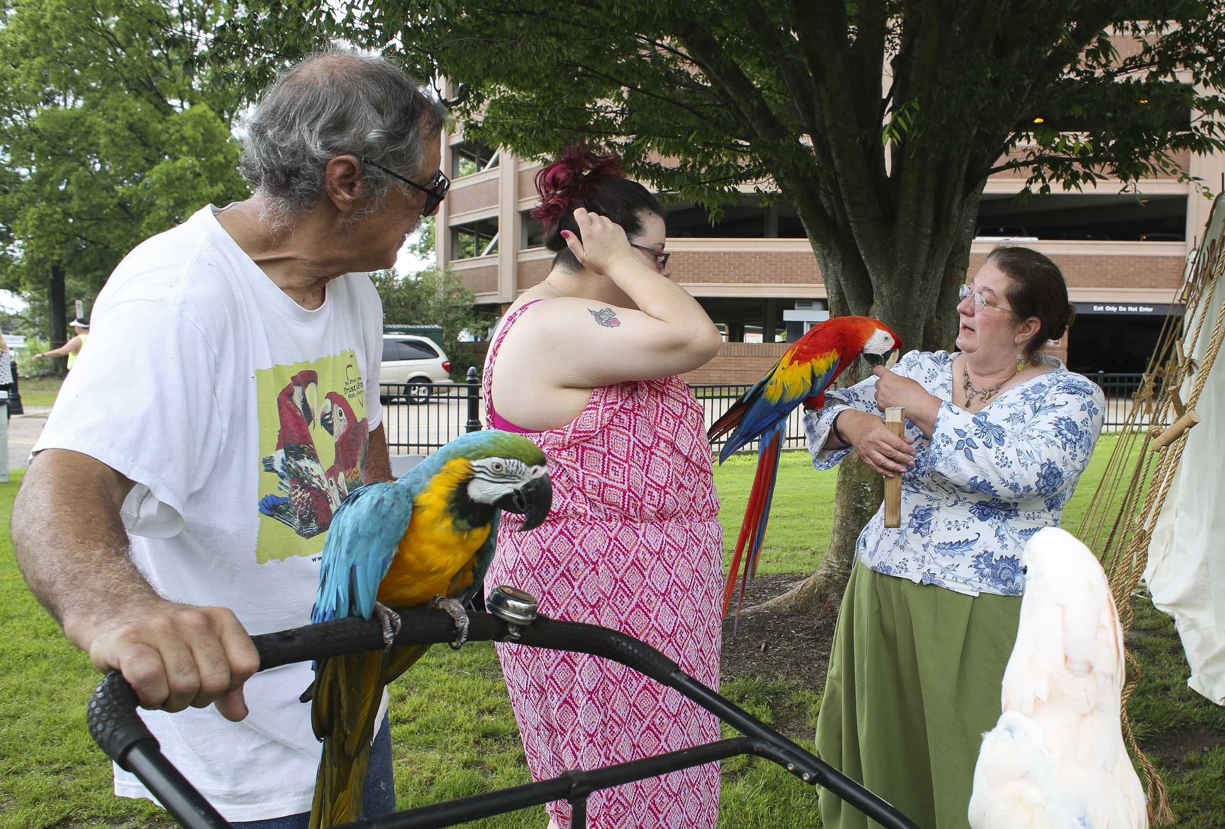 From left, Hampton residents Gene Sutter, Julie Sutter lets owner Laura Arnette of Cover dem Bones pets the Sutter's parrots Tattoo, Skittles and Maxwell at the   Blackbeard Pirate Festival, Hampton, Saturday, June 4, 2016.   (Sonya Paclob / Special to the Daily Press)