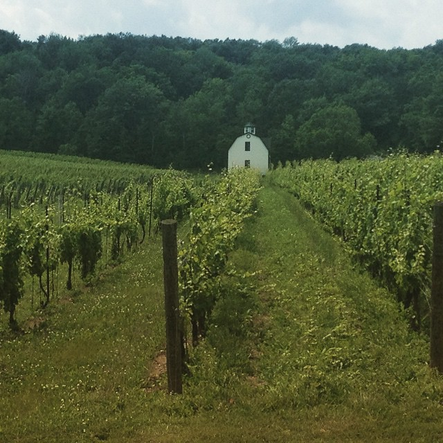 Ontario wine country in the summer. Headed towards Hidden Bench in search of delicious Riesling.