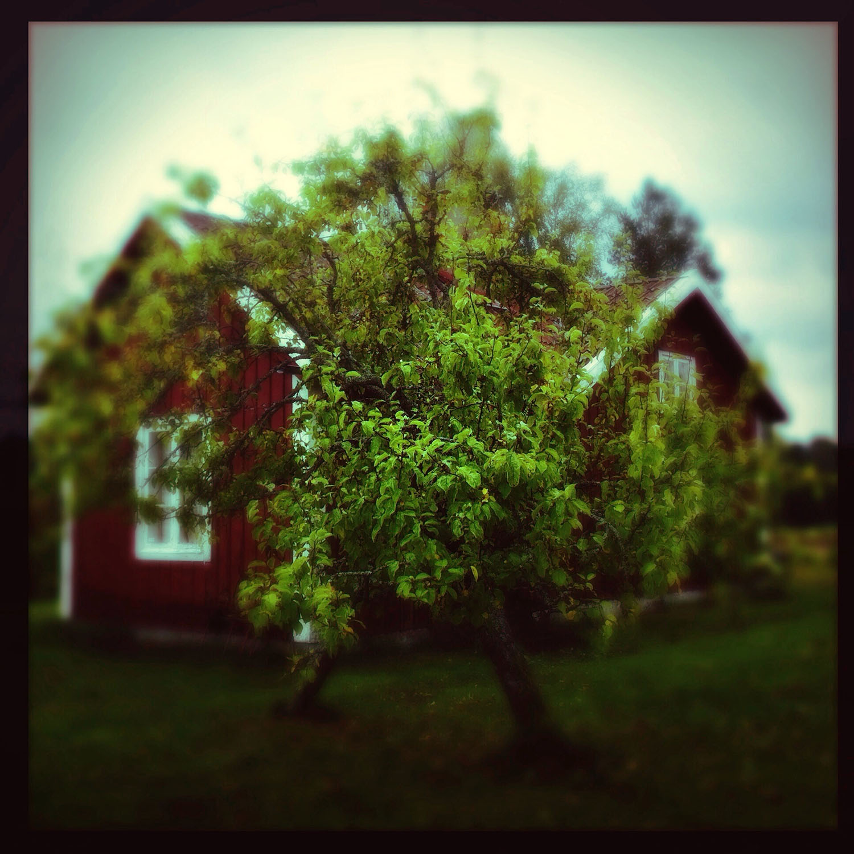 cottage.jpeg