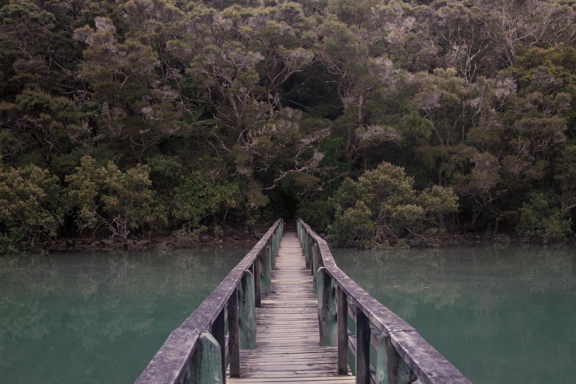 NZ_Wildlife_05.jpg