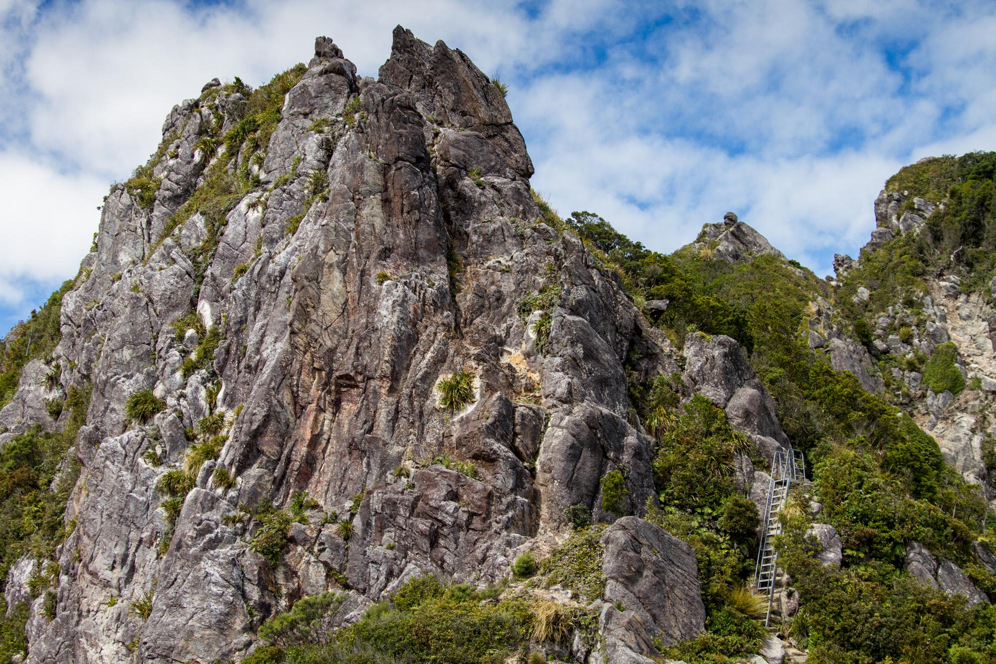 NZ_Wildlife_06.jpg
