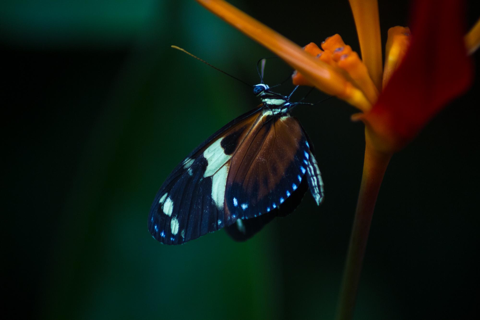 NZ_Wildlife_09.jpg