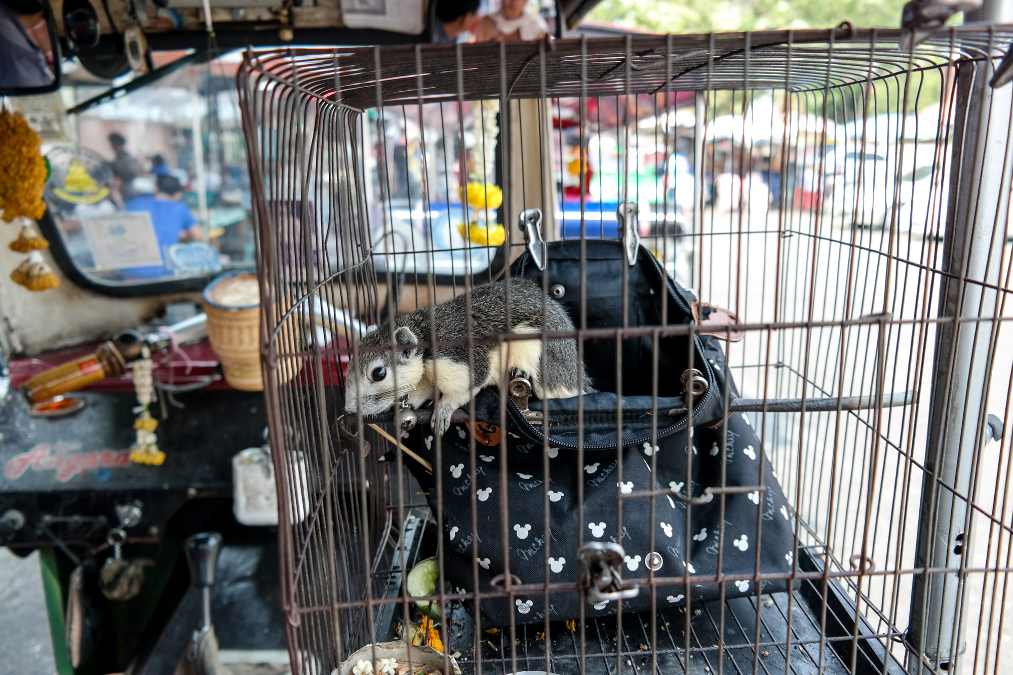The 22 months old squirrel of our tuk tuk driver who traveledloyally with us through town. Cruel but cute.
