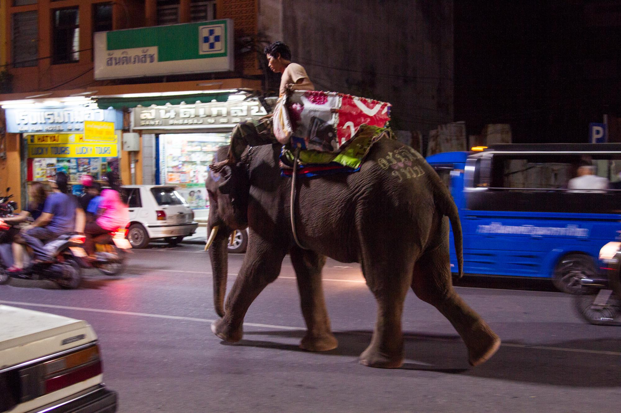 Elephant walking through the streets of Hatyai, Thailand.