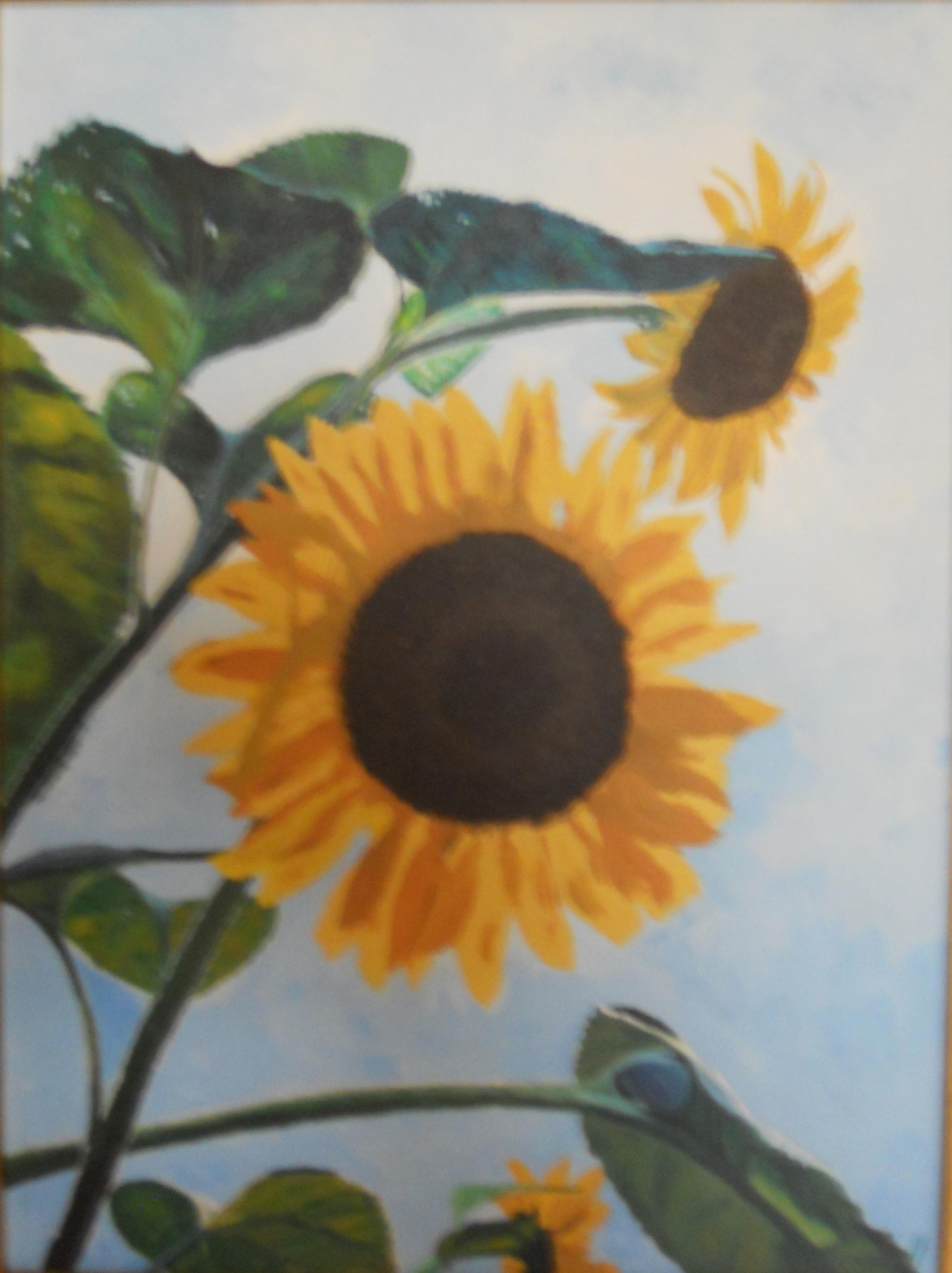 Cumberland Sunflowers - 16 X 20