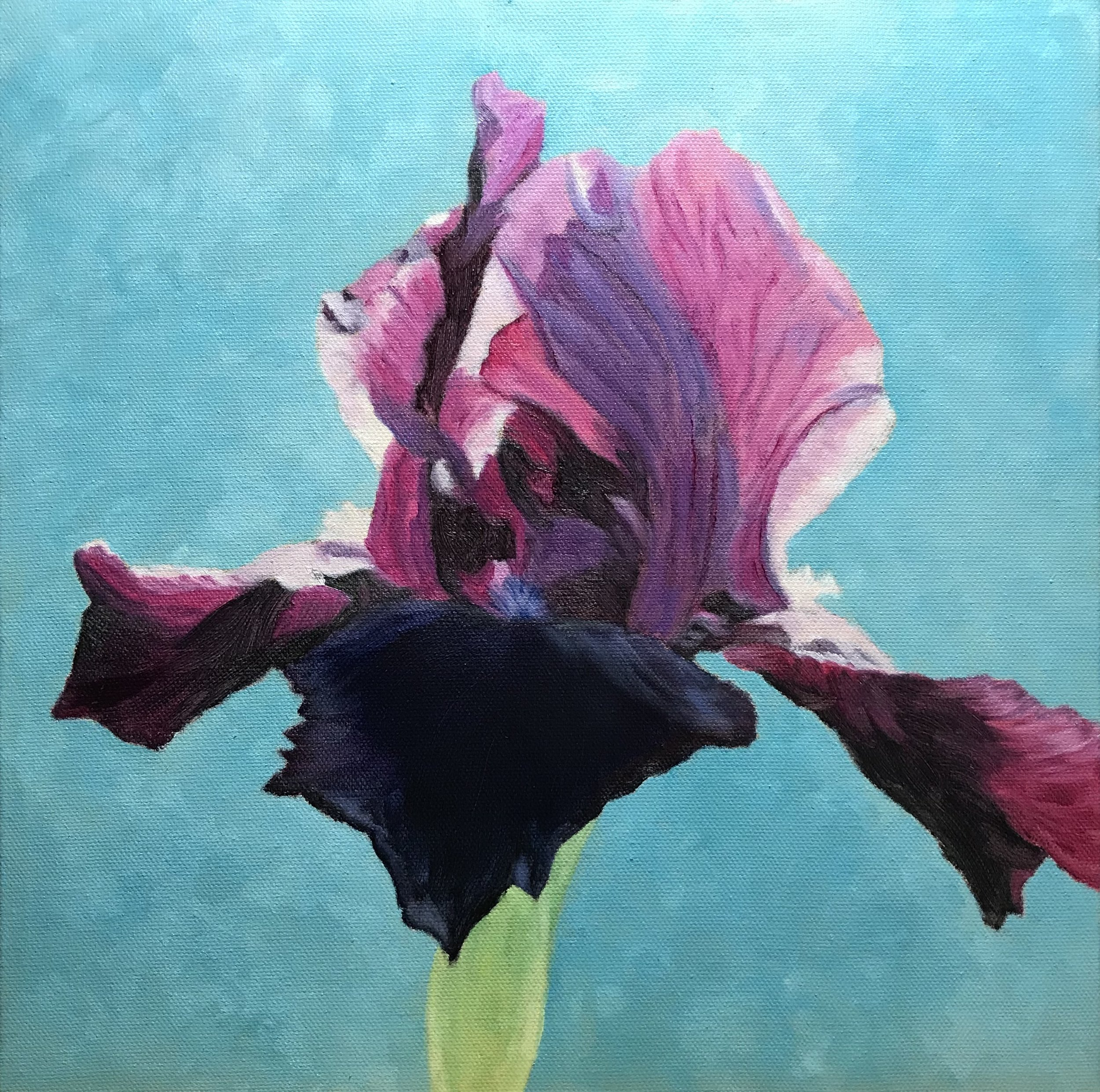 Blooming Iris -- 12 X 12