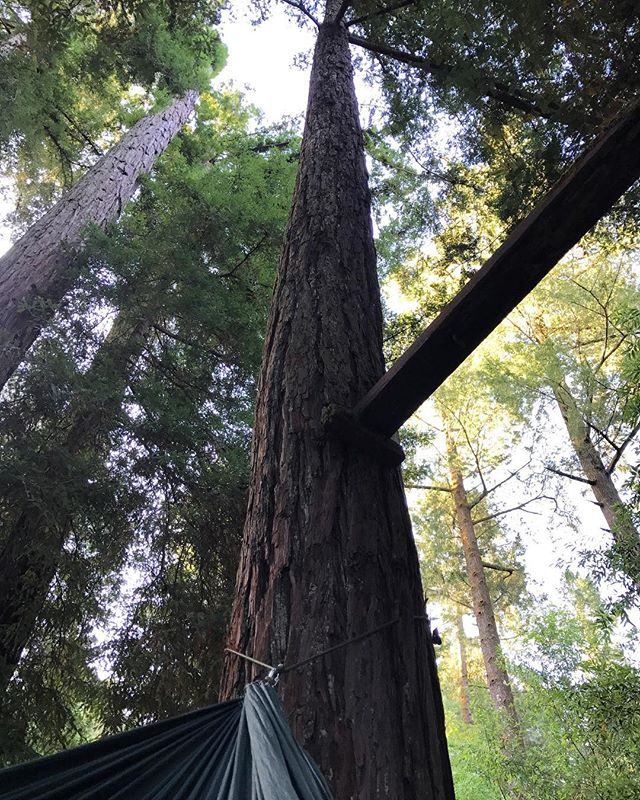 Rocked to sleep by Russian River redwoods