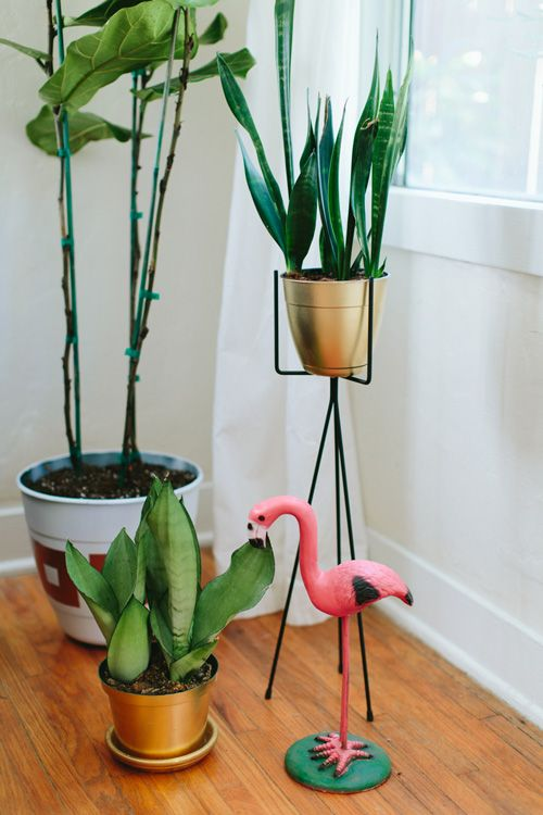 interior plants & flamingo
