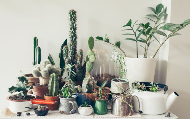 Potted cacti / via clementine daily