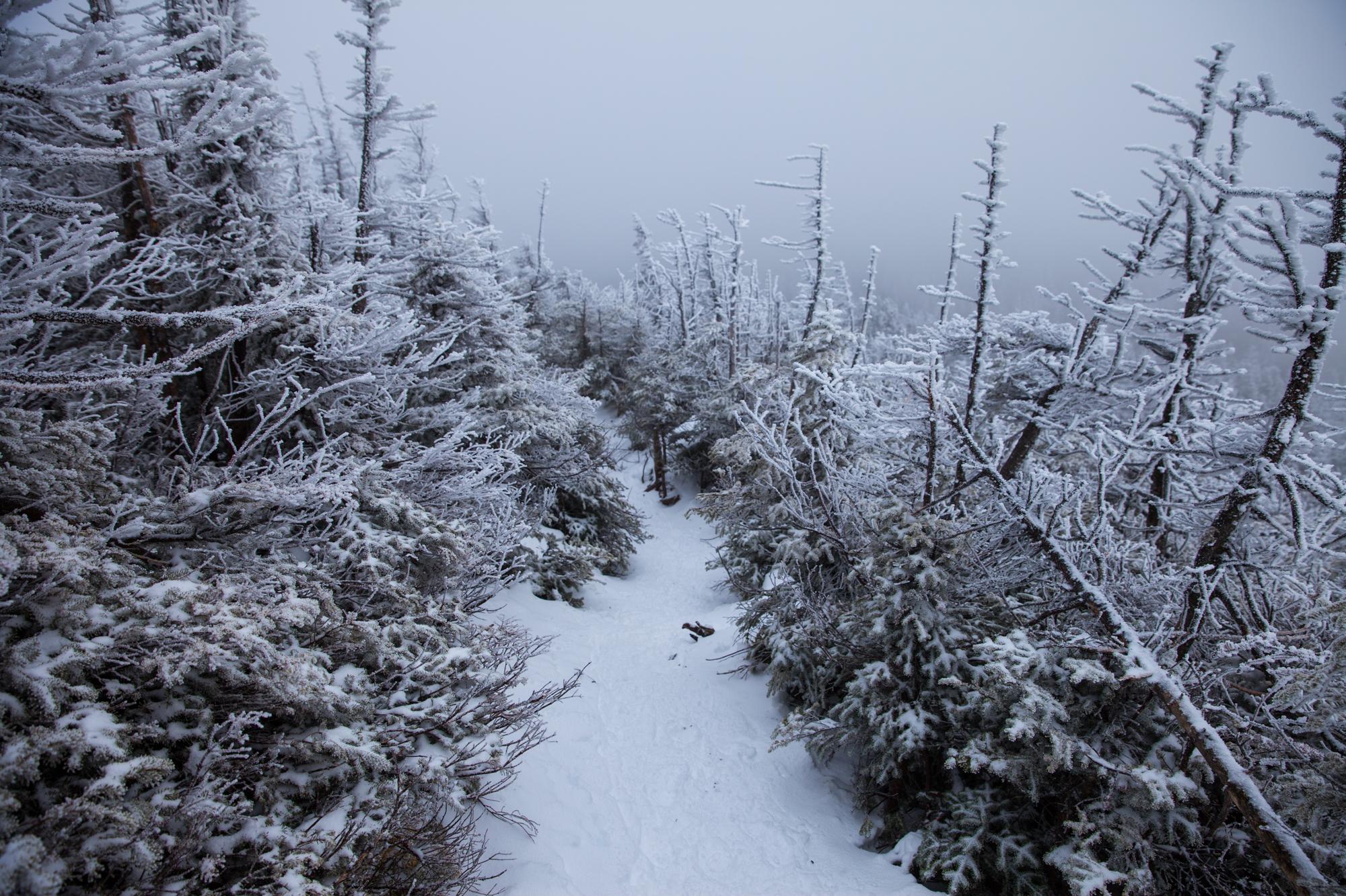 Decent trail of Mount Colden
