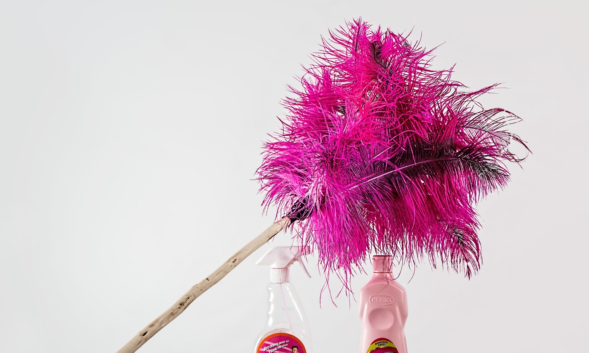 feather-duster-709124_1920.jpg