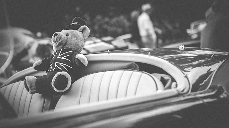 -Teddy riding shotgun