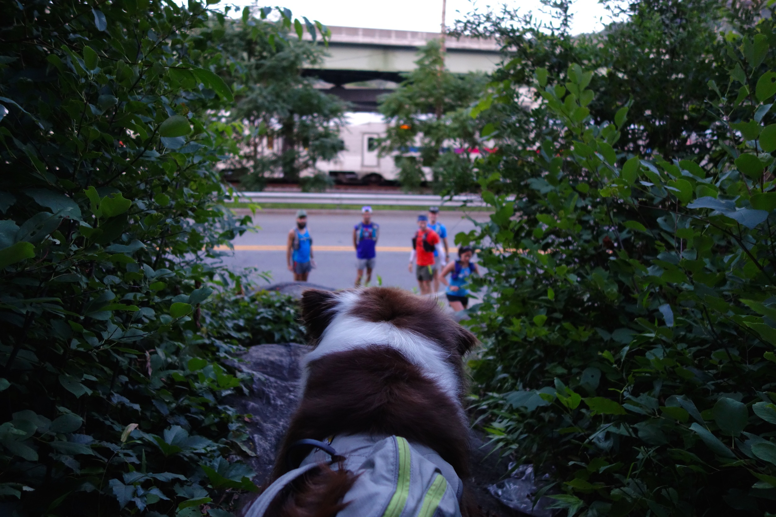 MPF Athlete Sammywaiting for the adventure to start! This is the beginning of the trail just off of route 59, slightly past the thruway underpass.